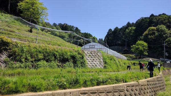 清阪田植え①
